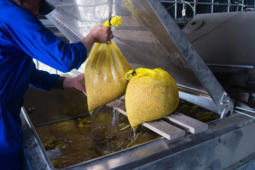 催芽のため水につけていた種もみをタンクから取り出します。