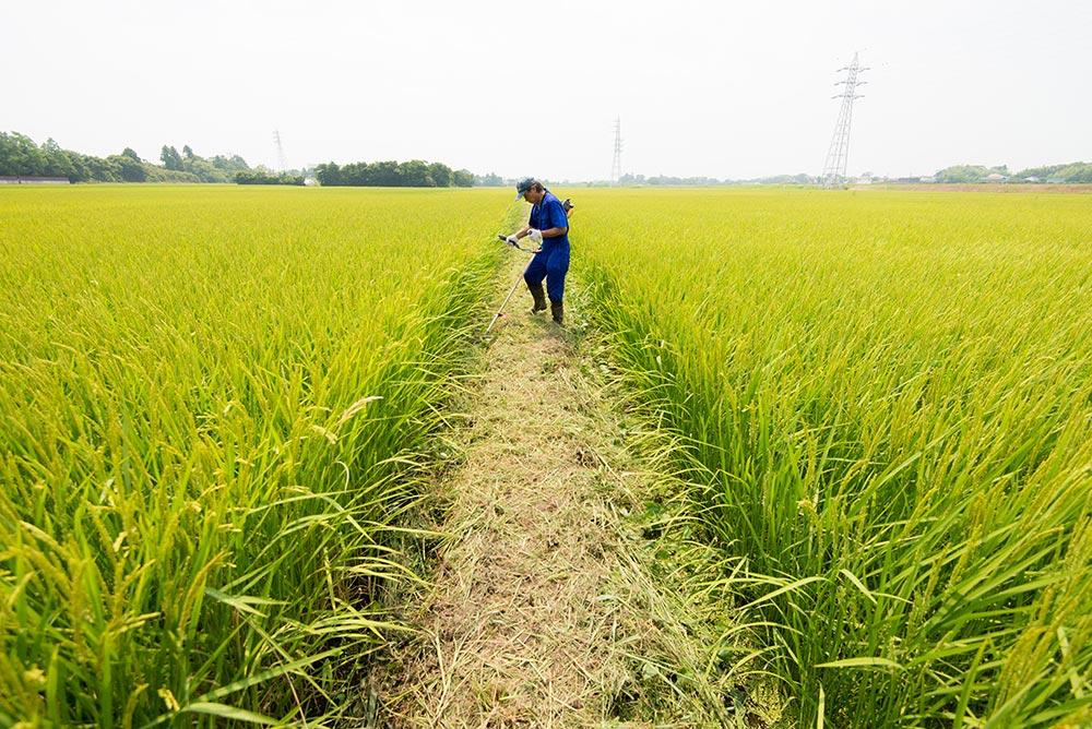 最後となる畦畔除草を行いました。当日の気温36.1度……天候には恵まれましたが、とても暑い日でした。